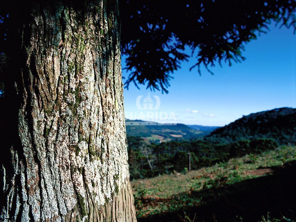 Terreno à venda em Aspen Mountain, Gramado - RS